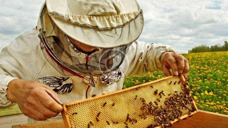 Die süße Wahrheit hinter dem Honig