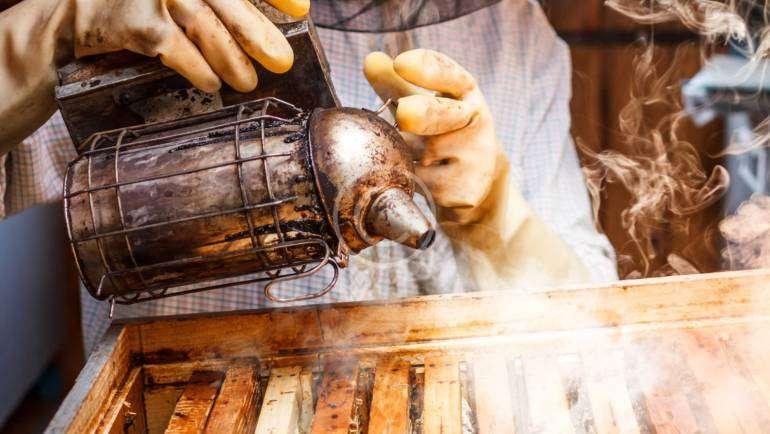 Der häufige Verzehr von Honig und Tee führt zu einer längeren Lebensdauer.